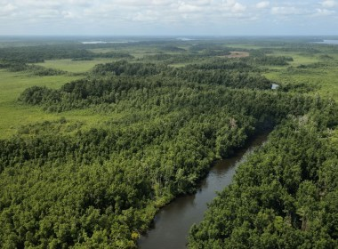 Gabon to receive funds to protect forests