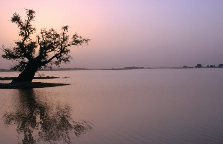 How the private sector is shaping the future of Lake Chad and the Congo Basin