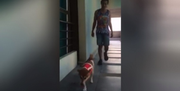 Three legged dog latest Thai Net sensation