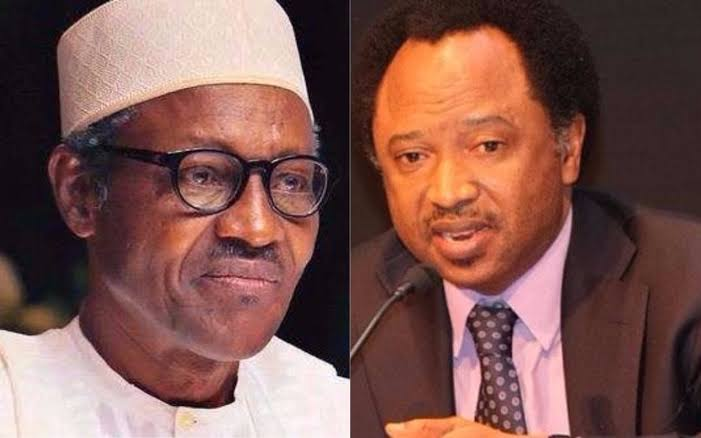 Buhari Cancelled His Presidential Broadcast Because Nigerians Planned To Stone Him  Shehu Sani