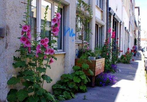 LYON | Demande de création d'un jardin de rue
