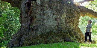 World's Oldest trees