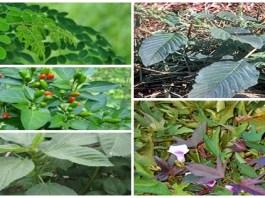 Top five herbal plants