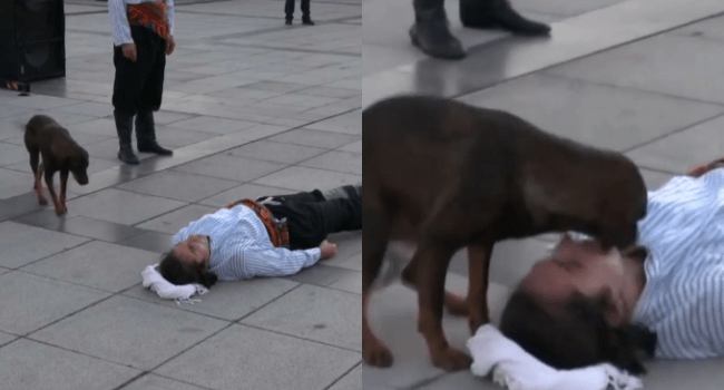 Stray Dog Helps Actor Pretending To Be Dead (VIDEO)