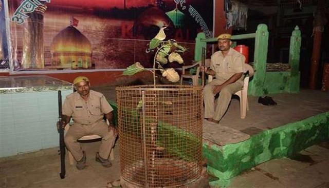 यूपी पुलिस की अनोखी ड्यूटी, 24 घंटे कर रही पीपल के पौधे की सुरक्षा