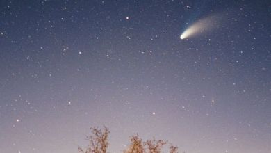 Cometa Halley - Web Story