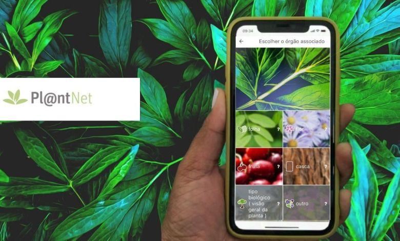PlantNet App para identificar plantas por foto