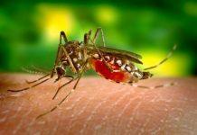 New species of mosquito