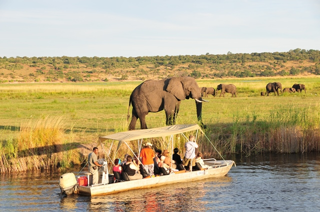 Tourists observe elephants in the Chobe National Park, northern Botswana, March 24, 2015. The Kasane Conference on The Illegal Wildlife Trade was held on Tuesday in Kasane, the gateway to the Chobe National Park, with delegations from 35 countries and around 20 international organizations. (Xinhua/Lu Tianran)(azp)