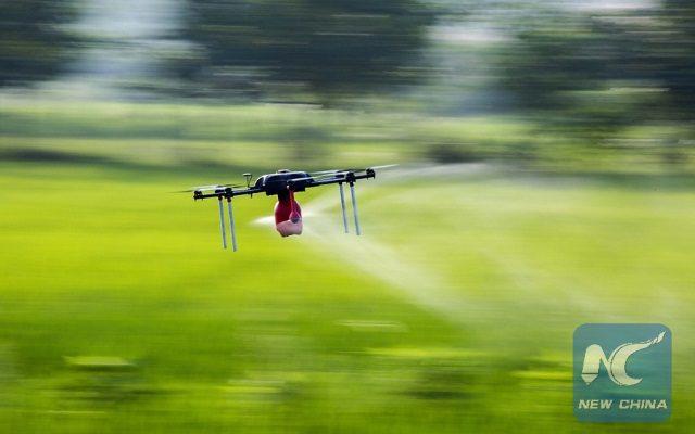 A drone sprays pesticide in a field in Duchang County of Jiujiang City, east China's Jiangxi Province, July 2, 2015. (Xinhua/Fu Jianbin)