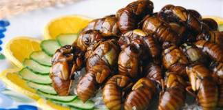 Wxin/Dreamstime.Com Cicada aficionados boil or fry them up like shrimp.