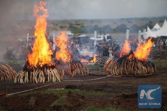 Photo taken on April 30, 2016 shows the site of a historic torching of ivory and rhino horns at Nairobi National Park in Nairobi, Kenya. [Photo/Xinhua]