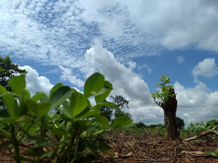 Ghaffap World Environment Day