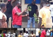 Iday Ghana Promotes The Life Saving Artemisia Plant