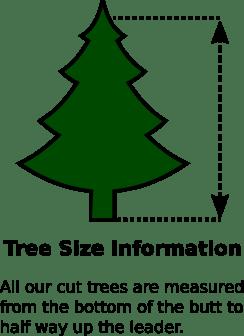 Tree size measurement information