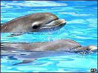 Delfines (foto de archivo)