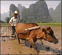 China Rural