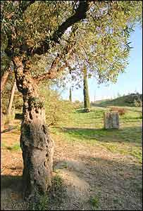 Parque Federico Garcá Lorca.