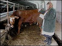 Anastasia, una funcionaria revisa los niveles de radiación en el ganado.