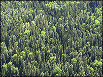 Forest in Finland (Image: Erkki Oksanen, the Finnish Forest Research Institute)