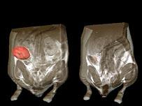 Ratón con tumor canceroso antes y después del tratamiento.