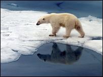 Los osos polares, frecuentes en la zona, pueden servir de barrera natural contra incursiones.