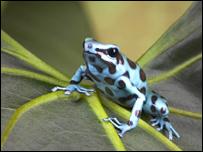 32% de los anfibios está en peligro de extinción.