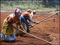 Women working in a field (Image: AGRA)