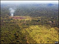 Burned area of forest in Para (2006 file photo)