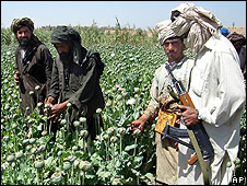Taleban in opium field in south-west Afghanistan, April 2008