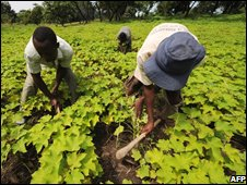 Non-food crops, such as jatropha, do not distort food prices