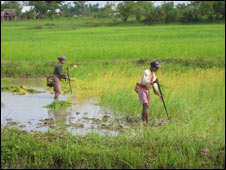 Farmers in paddy field