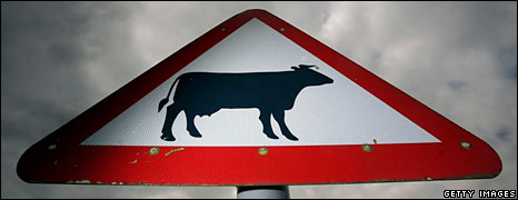 Cow road sign