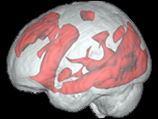 Brain activity in an experienced internet user when searching the web