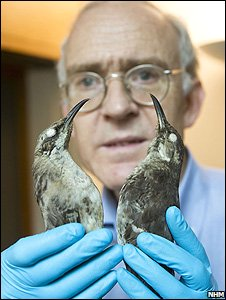 Las curiosas aves de Darwin