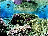 Fondo marino en el Pacifico