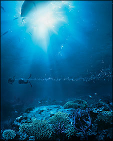 Scuba-diving in the Great Barrier Reef