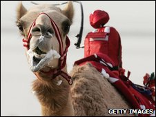 The UAE banned child camel jockeys in 2002