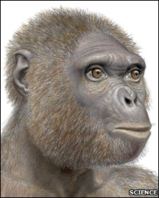 An artist's impression of Ardipithecus ramidus. Scientists say the creature is a central character in the story of human evolution