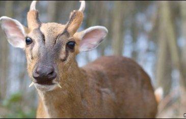 Belgian rangers busted for exotic deer moneymaker