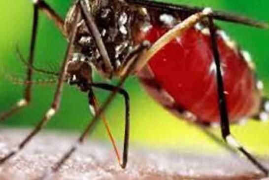 धर्मनगरी हरिद्वार और दून में गहराता जा रहा डेंगू का डंक
