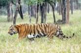 वन्यजीवों और मानव के बीच छिड़ी जंग, चिंताजनक स्थिति में पहुंची