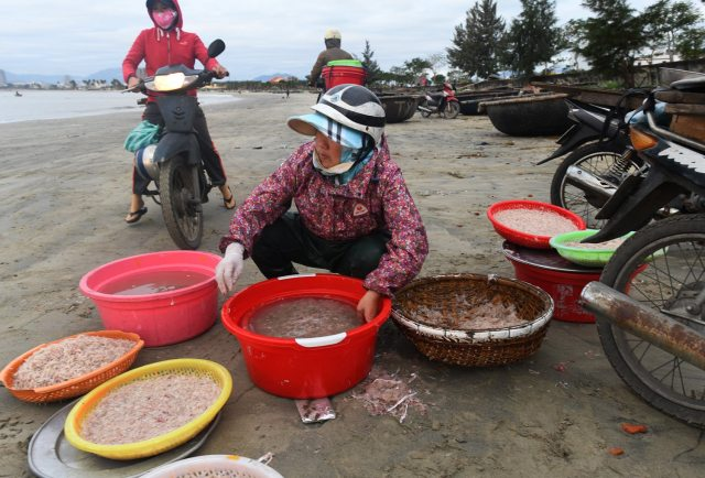 A woman clean and weigh small shrimp on the beach   early Tuesday morning Jan 30, 2018 in Da Nang, Vietnam. (Nate Guidry/Post-Gazette)
