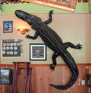 Nik, one of several alligators caught, stuffed and mounted at Snook Haven restaurant on the Myakka River in Southwest Florida. (Patricia Sheridan/Post-Gazette)