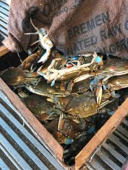 A box of blue crabs caught in Southwest Florida's Peace River, ready to be cooked and served at Peace River Seafood. (Patricia Sheridan/Post-Gazette)