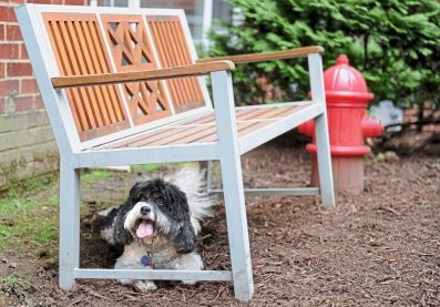 Henry, 5, takes a break from chasing tennis balls in the new dog park at the Shadyside Inn All Suites Hotel, one of the new dog-friendly design and amenities offered at the hotel. (Pam Panchak/Post-Gazette)