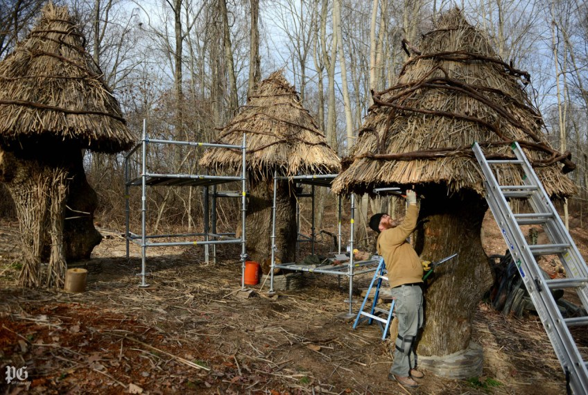 William Cahill of Cincinnati, Ohio, thatches a roof onto one of a series of huts made from stumps of a 227-year-old white oak in the Bookworm Glen section of the Pittsburgh Botanic Garden in Oakdale on Monday, Nov. 23, 2015. (Michael Henninger/Post-Gazette)