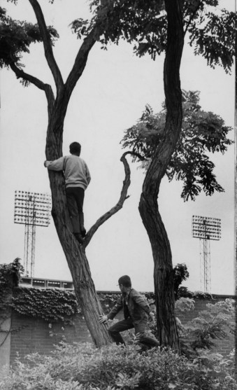 June 27, 1970: Tree climbers at Schenley Park try to get a better view of center field during one of the final games at Forbes Field. (Howard R. Moyer/Pittsburgh Press)