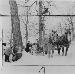 Old fashioned maple operations used a horse-drawn cart known as a tank for collecting sap. (Pittsburgh Post-Gazette)