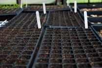 Seedling trays in the greenhouse at Spice Acres, a 14-acre farm in Cuyahoga Valley National Park in Ohio on June 3, 2016. Spice Acres is part of the National Park Service's Countryside Initiative to preserve farmland through sustainable practices.